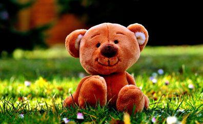 Smiling teddy bear, toy, meadow, grass