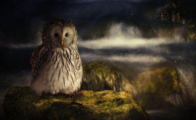 Owl bird, predator, night