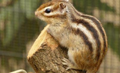 Cute squirrel, rodent, animals