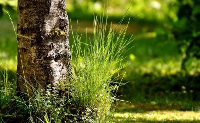 Tree trunk, grass, garden