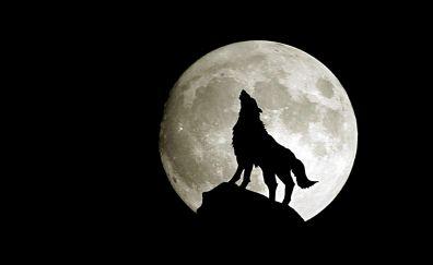 Full moon, wolf roar