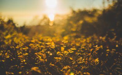 Green Plants in sunlight