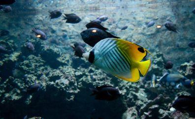 Tropical beautiful fish