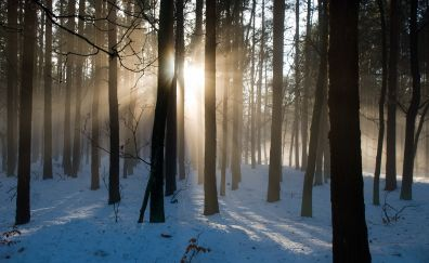 The forest, sunshine, tree, nature