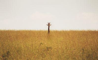 Giraffe in grass field landscape