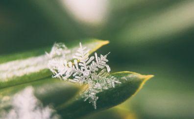 Snowflake, leaves, close up