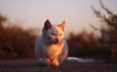 Cat, stare, sitting