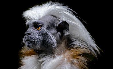 Monkey muzzle, yellow eyes, furry