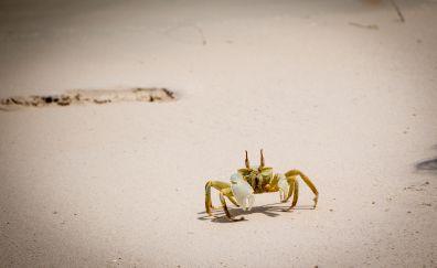 Sand, beach, crab
