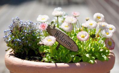 Flowerpot, flowers, close up, welcome