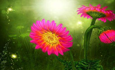 Gerberas daisy pink flowers