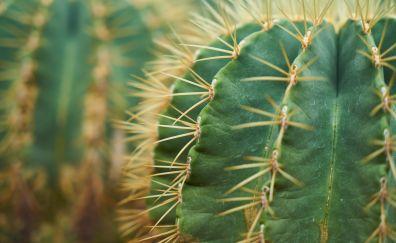 Cactus, plants, green, thorns