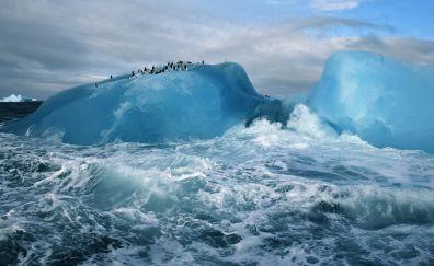 Iceberg and sea waves in arctic sea