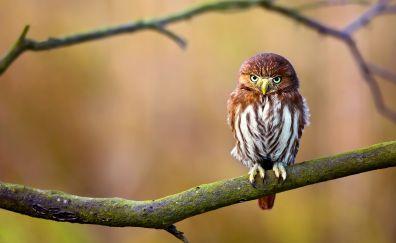 Cute, owl, bird, sitting, tree branch