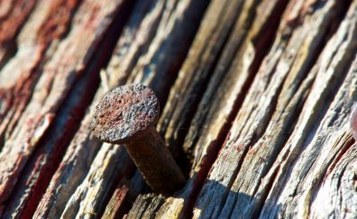 Rusty nail in the wood