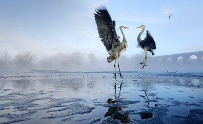 Heron, birds, jump, lake