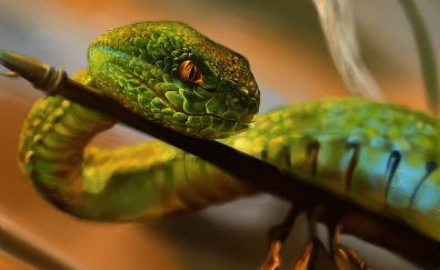 Green Snake, reptiles, artwork