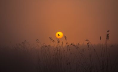 Sunrise, spring, sun, plants
