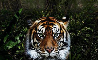 King of jungle tiger