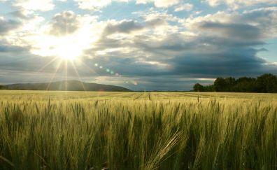 Sunlight, green wheat farm, clouds