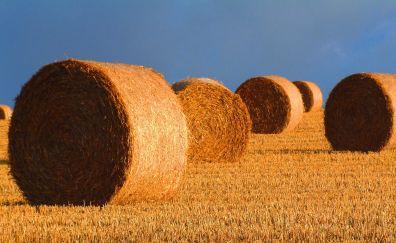Harvest, hays, wheat field