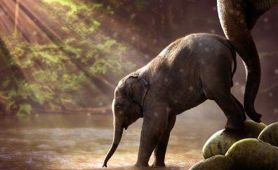 Elephant, baby animal, river