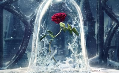 Beauty and the beast, 2017 movie, Rose