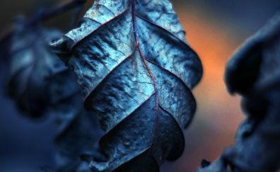 Blue leaf close up