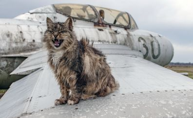 Angry cat sitting on wings of wreck plane