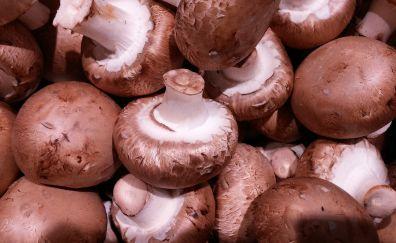 Brown mushrooms, fungus