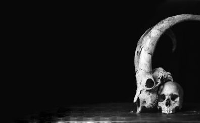 Skulls monochrome
