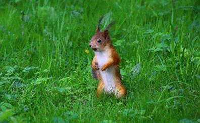 Curios Chipmunk, rodent in garden