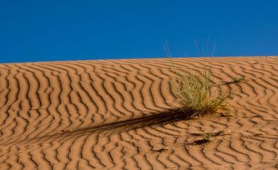 Sahara desert, nature
