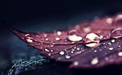 Water drops on leaf, close up