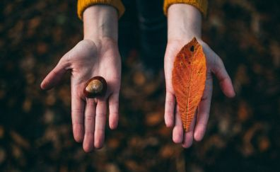 Leaf and stone in my hands