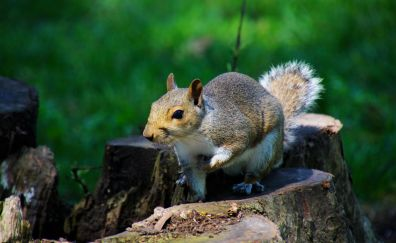 Squirrel, play, rodent, cute