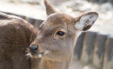 Deer, cute animal, zoo, muzzle