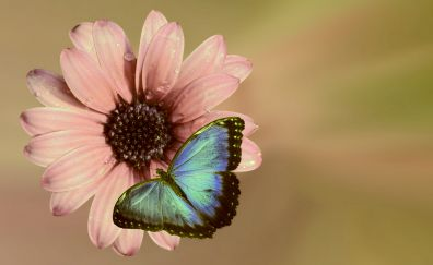 Flower pink, blossom, butter fly