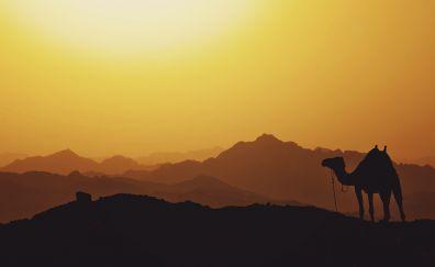 Camel, animal, mountains, sunset, horizon