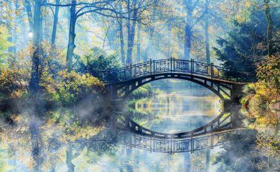 Tree forest bridge landscape