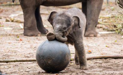 Baby elephant animal