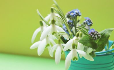 Lavender & Snowdrop flowers in pot