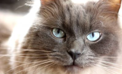 Cat, muzzle, eyes