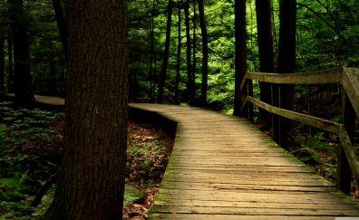 Bridge of the wood