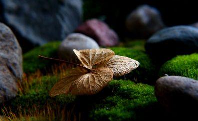 Dry leaf, rocks, close up