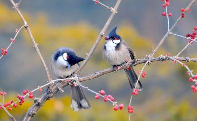 Birds on cherry tree