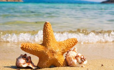 Beach, starfish, shell, sand, sea waves