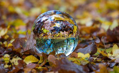 Ball glass sphere fall foliage