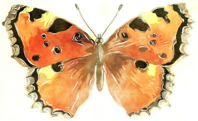 Butterfly, insects, painting, art