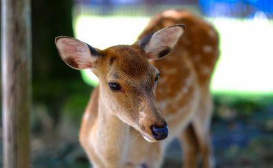 Deer muzzle